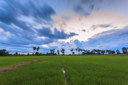 Beautiful landscape of green rice farm at sunset with long exposure