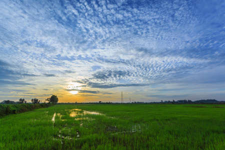 Beautiful landscape of tropical green rice paddy farm at morning sunrise