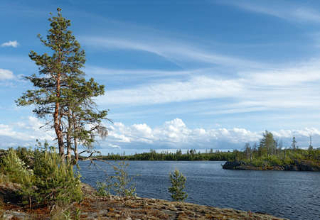 Summer landscape with a pine. Lake Ladoga