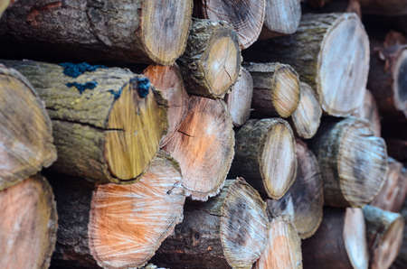 woodpile: stock of woodpile seen from 45 degree angle