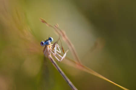 vegatation: extreme closeup of dragonfly on meadow  Stock Photo