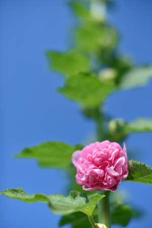 Beautiful Flower in the garden Stock Photo