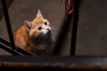 A stray cat in the stairwell