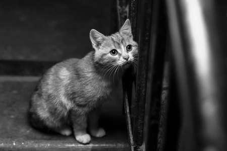 Homeless ginger kitten in the entrance black and white poster