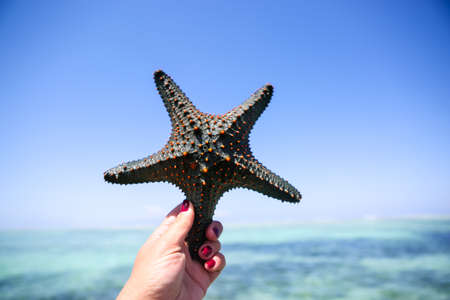 Starfish in the lagoon on the southern beach on the ocean. Marin Stock Photo