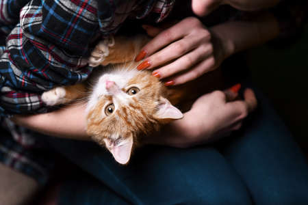 Kitten sitting on hands at the girl Stock Photo