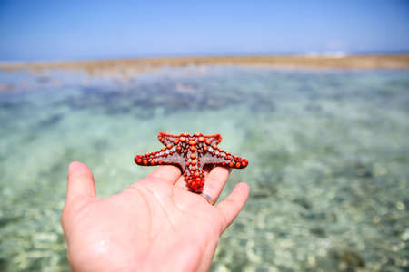 Starfish in the lagoon on the southern beach on the ocean. Marin Imagens