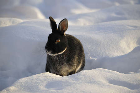 rabit: Bunny