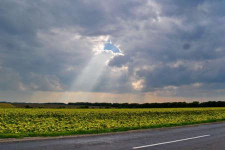agro: sun light