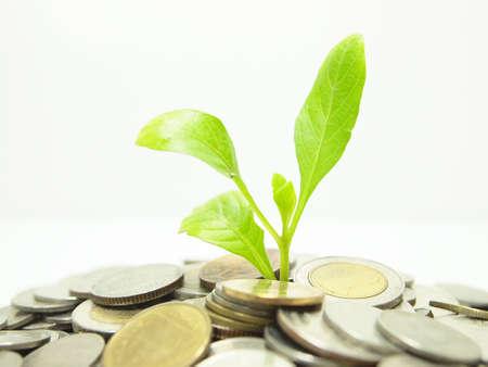 risparmio energetico: Concetto di denaro e vegetali Archivio Fotografico