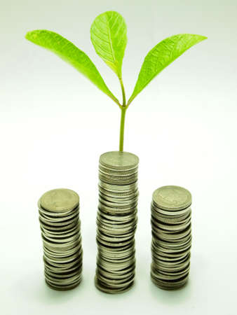 Money concept Coins and plant, isolated on white background photo