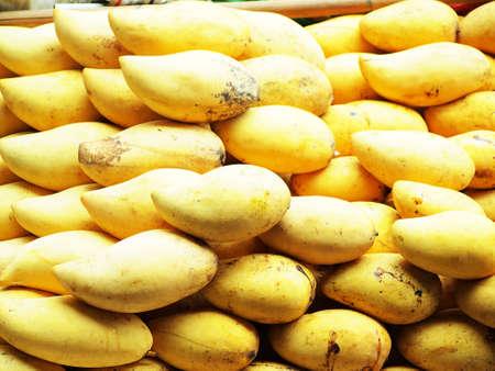 Yellow mango background or wallpaper. Bunch of tropical fruits. Oval yellow mango pile. Sweet dessert or vegetarian food. Exotic mango horizontal image. Fresh ripe exotic mango stack. Raw juicy fruit Stock Photo