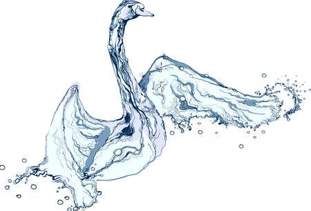 water bird: Water splash swan