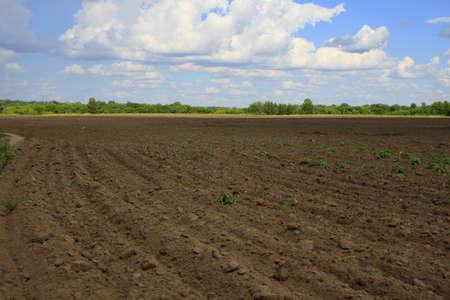 soil conservation: Farming Rows