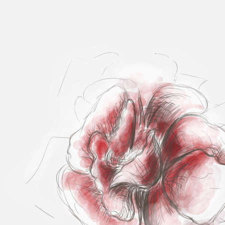 blooms: Red rose sketch