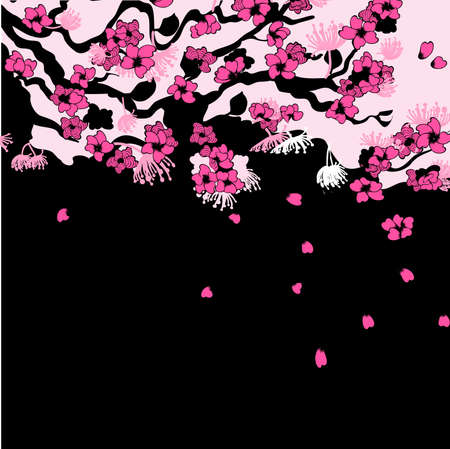 cherry blossom tree: Sakura branch background