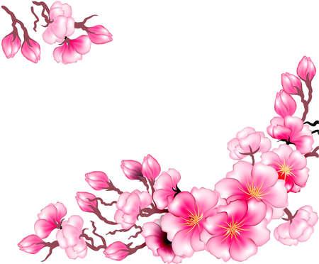 flor de sakura: Rama de Sakura flores diseño de la plantilla
