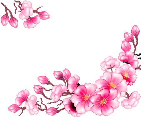 sakura flowers: Sakura branch flowers design template