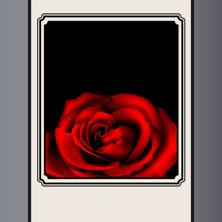 Rose in frame Vector