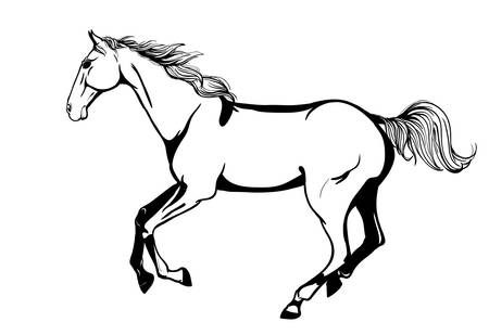 Arabian horse Stock Vector - 16308158