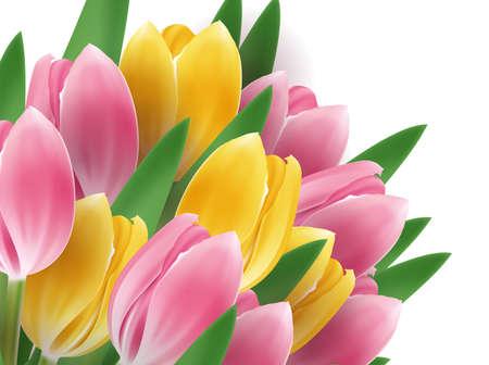 Tulip bouquet Stock Vector - 17322061