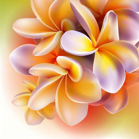 Frangipani flowers Stock Vector - 17388227