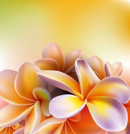 Frangipani flowers Stock Vector - 17388226