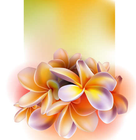 fragrant bouquet: Frangipani flowers