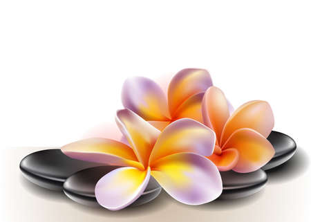pebbles: Spa concept zen stones with frangipani flowers Illustration