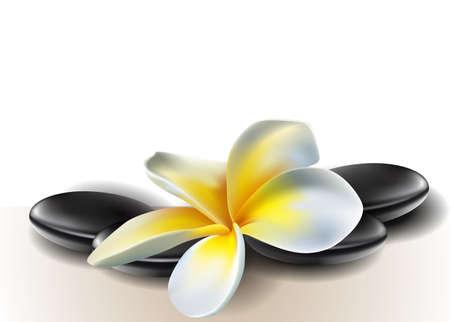 Spa concept zen stones with frangipani flowers Stock Vector - 17363031