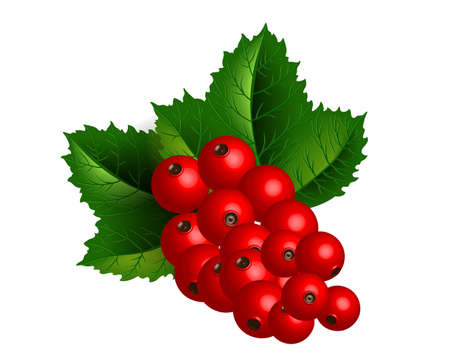 Redcurrant branch isolated over white Stock Vector - 17434851