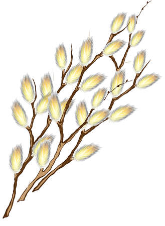 cling: Pussy willow branches