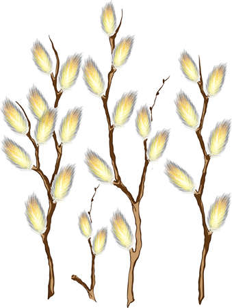 Pussy willow branches Stock Vector - 17562271