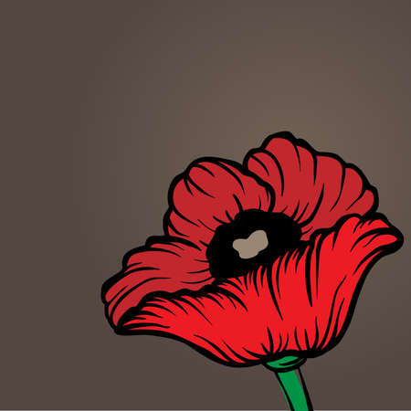 Poppy flower Vector