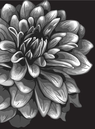 Dahlia illustration Vector