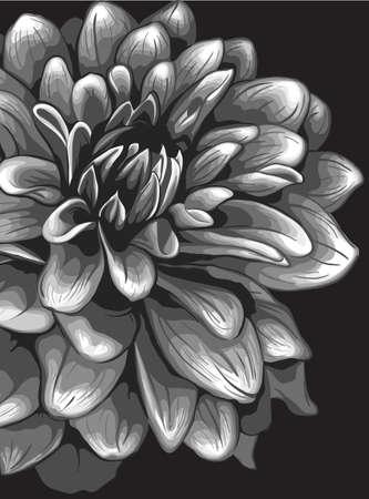 Dahlia illustration Stock Vector - 17695396