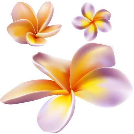 plumeria on a white background: Frangipani flowers