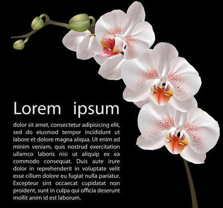 white orchids: Orchid design template