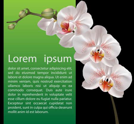 orchidee: Modello di progettazione Orchidea