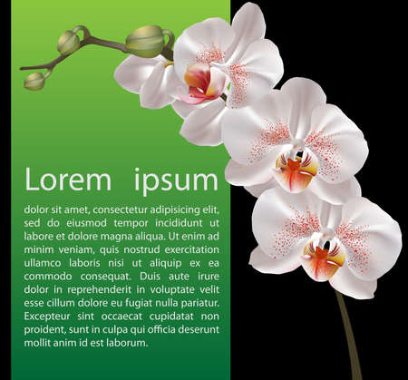 gentle background: Orchid design template