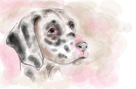 dalmatian: Dalmatian dog aquarelle painting imitation