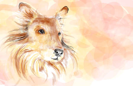 sheepdog: Collie dog aquarelle painting imitation