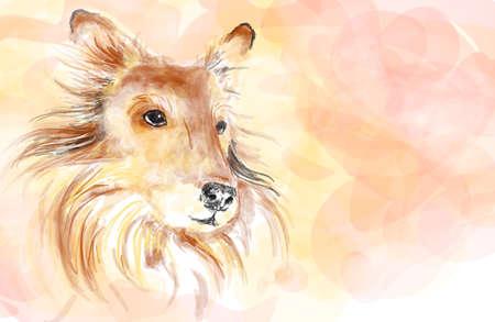 shetlander: Collie hond aquarel schilderen imitatie