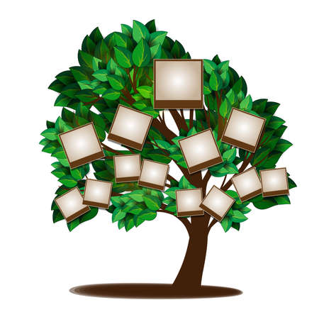 arbol genealógico: Árbol genealógico diseño de la plantilla