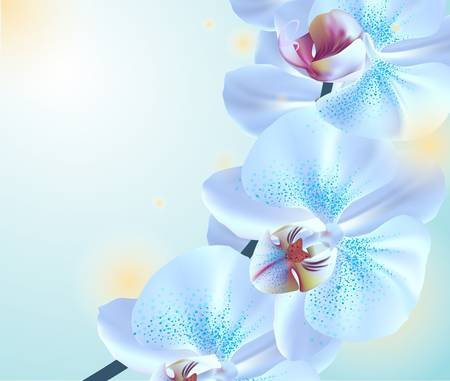 Blue orchid flowers Stock Vector - 19841473