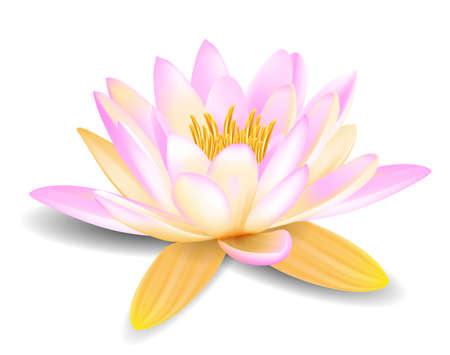 meditation isolated white: Water lily Illustration