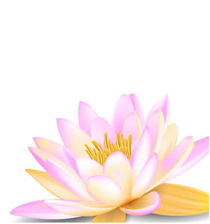 waterlilies: Water lily Illustration