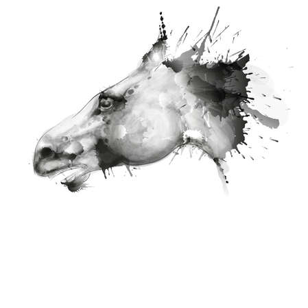 Horse head watercolor grunge illustration Vector