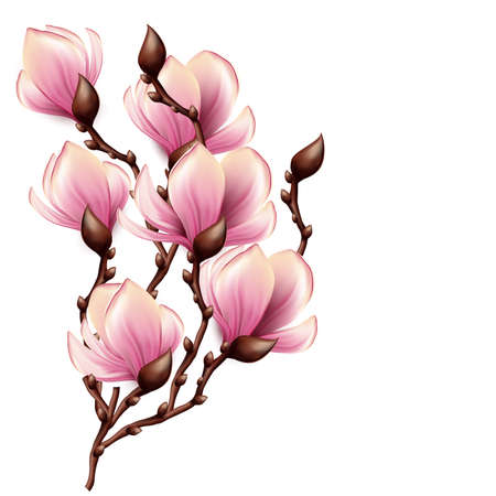 Magnolia branch isolated Фото со стока - 20278950