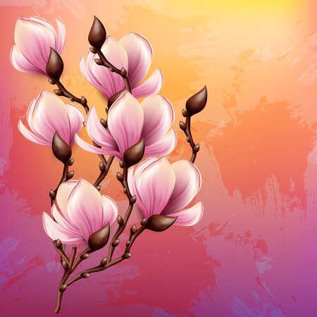 magnolia: Magnolia branch isolated
